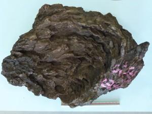 27億年前の鉄鉱層にともなうストロマトライト様構造
