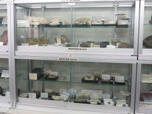 古生代・中生代・新生代の化石