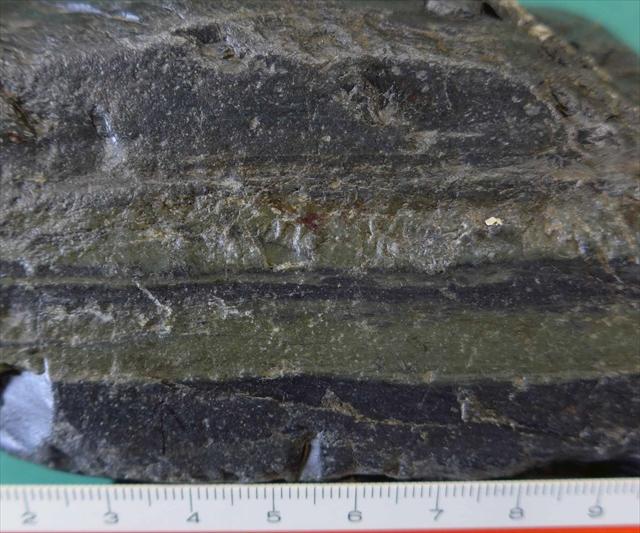 泥岩凝灰岩互層:標本番号Y0105