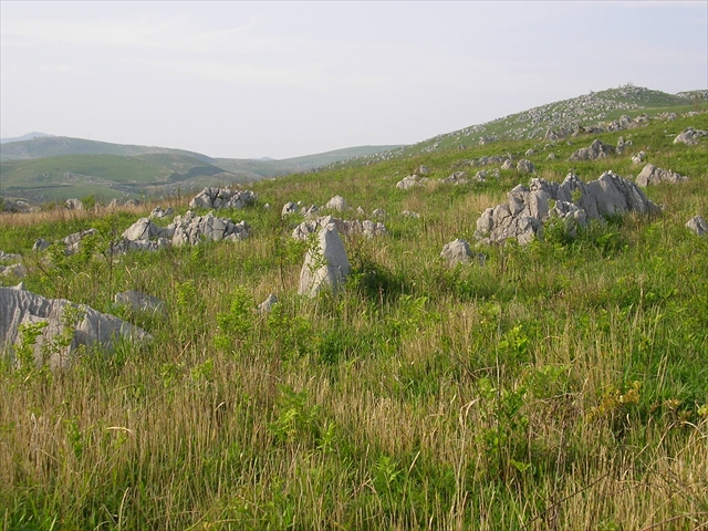 秋吉台の景観:カルスト地形